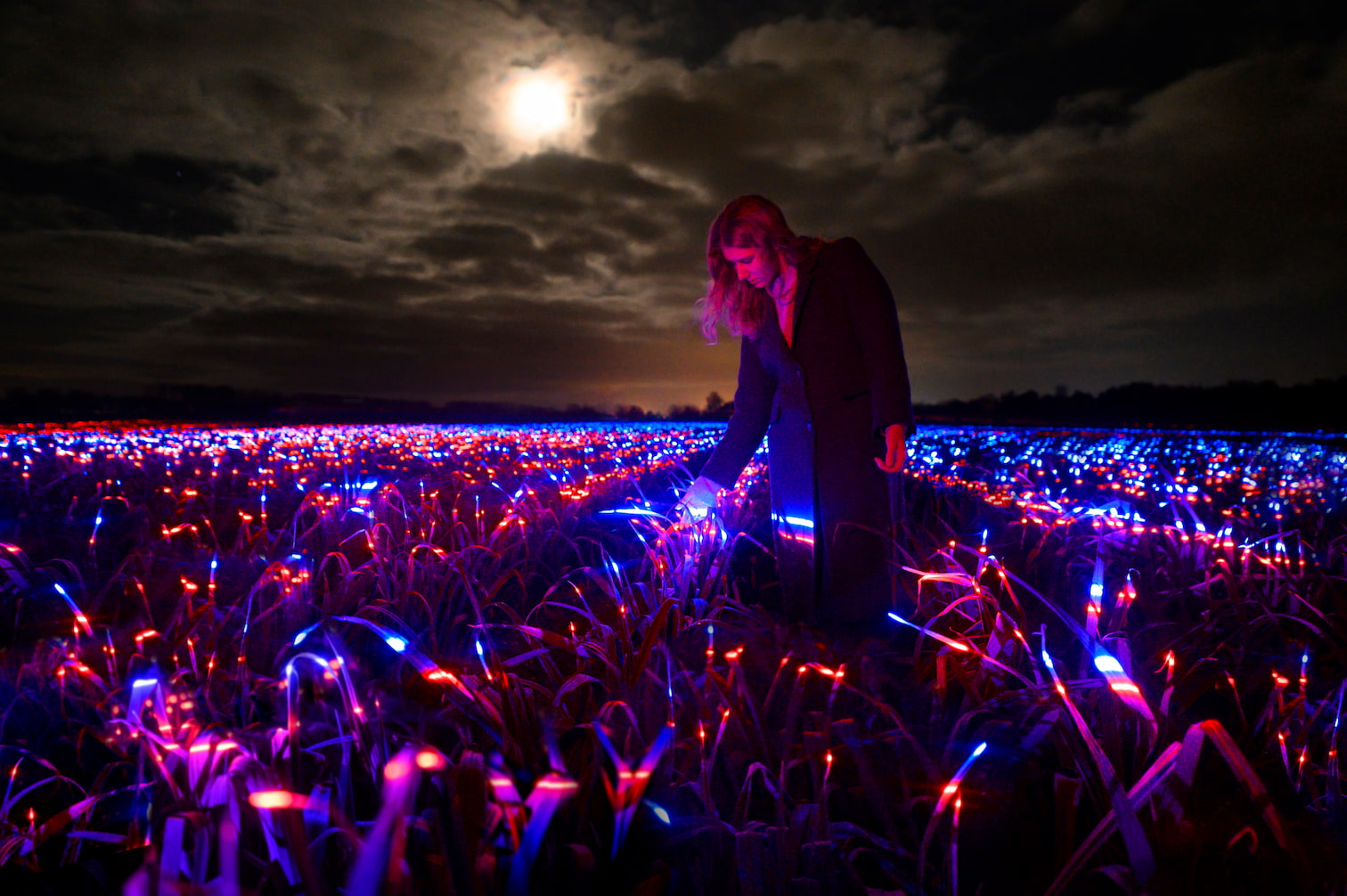A woman explores Studio Roosegaarde's Grow by moonlight, brushing her hand against the crops illuminated with red blue and ultraviolet light